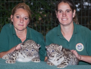 Snow Leopard Cubs born at Thrigby